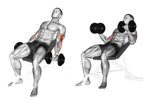 seated incline curl.jpg